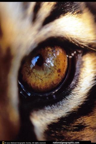 Тигровый глаз